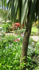 Garden view from Palm Bed to grass