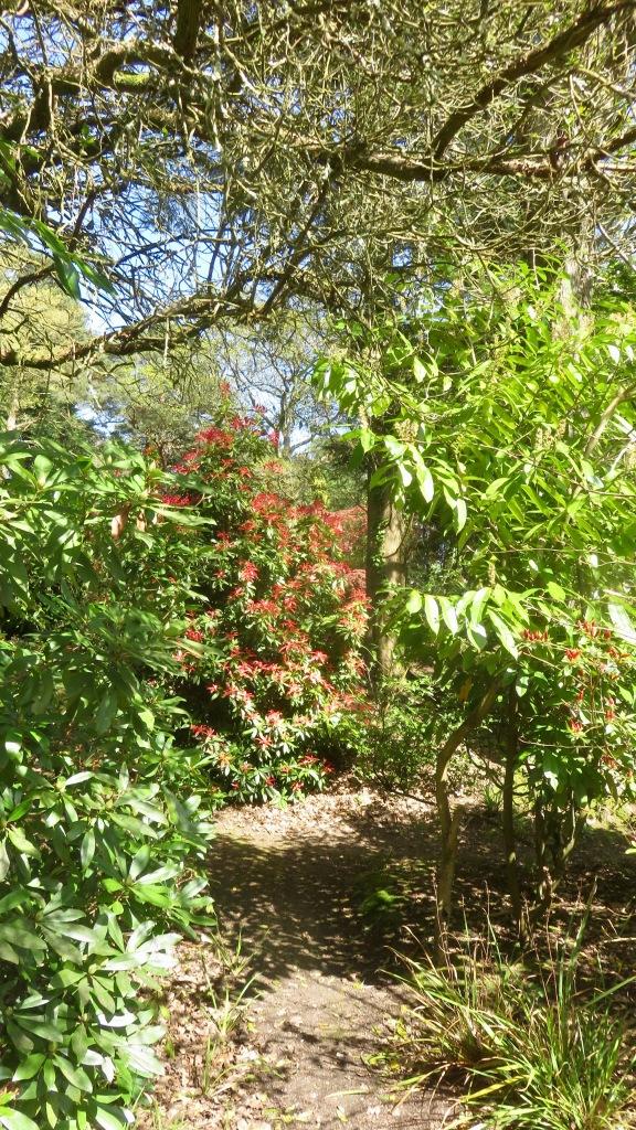 MacPenny's garden