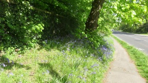 Footpath and bluebell bank
