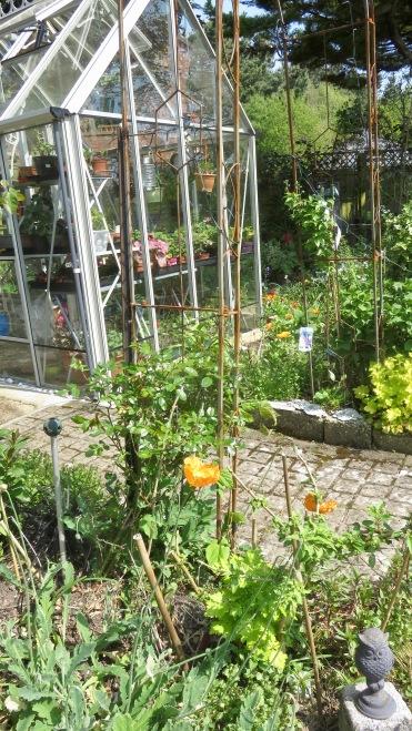 Orange poppies and marigolds