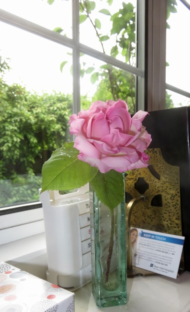 Rose pink fragrant rambler