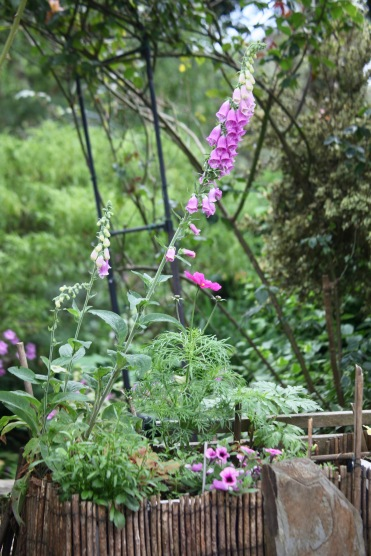 Foxgloves, cosmos, petunias