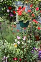 Roses, geraniums, etc