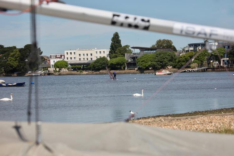 Swans, sailboarder, black-headed gull