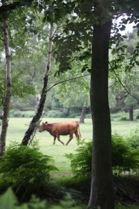 Cow in woodland