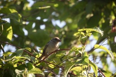 Sparrow with beakful