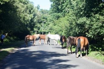 Ponies on road