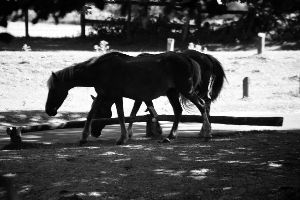 Ponies