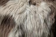 Donkey's fur