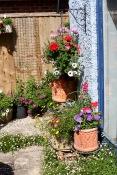 Patio with Petunias, geraniums, snapdragons, cosmos, bidens, erigeron etc