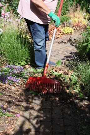 Jackie raking Rose Garden