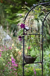 Clematis and foxgloves