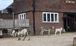 Donkeys and foal