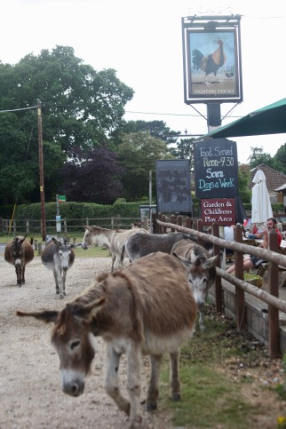 Donkeys at The Fighting Cocks