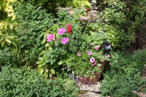 Cosmos, snapdragons, petunias, violas