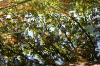 Trees reflected on Eyeworth Pond