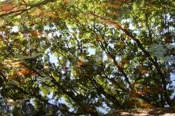 Trees reflected on Eyeworth Pond
