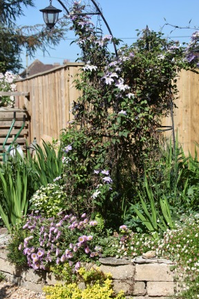 Clematis and erigerons