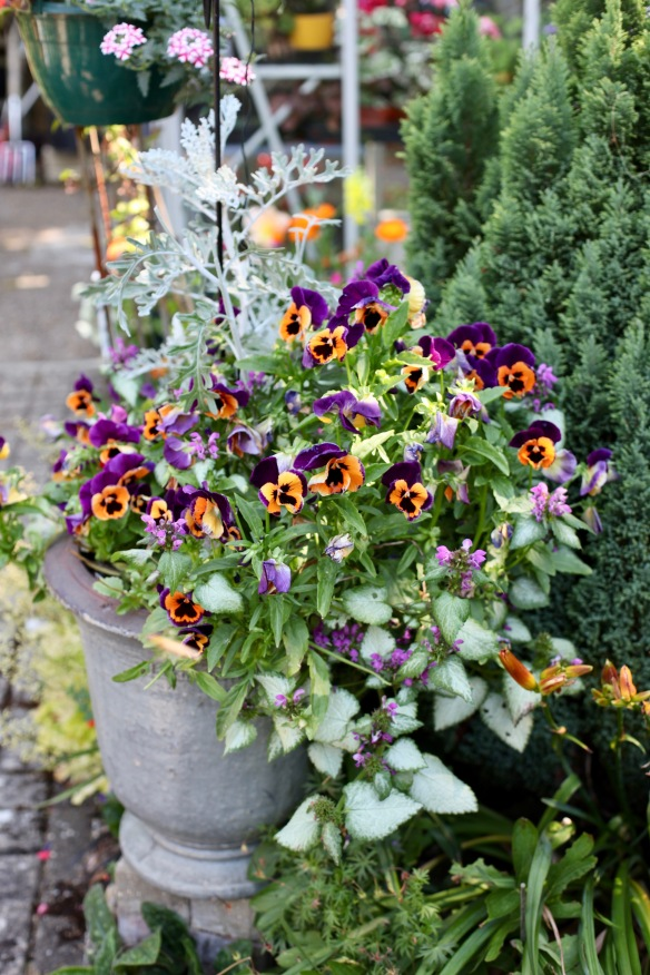 Pansies in refreshed urn