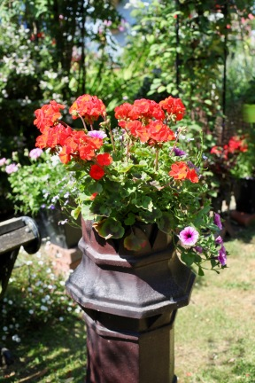 Geraniums and petunias in chimney pot