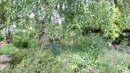 Jackie in garden view across Weepin Birch bed