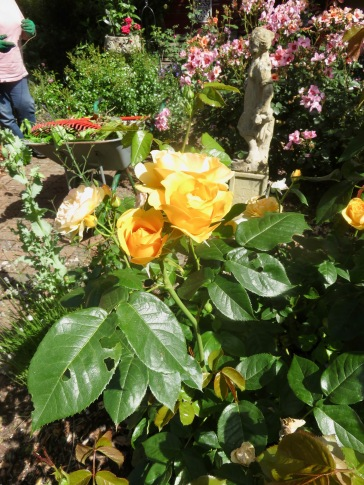 Rose Garden Absolutely Fabulous and For Your Eyes Only