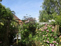 Rose Garden including Sambucus Black Lace