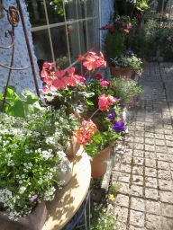 Hanging baskets along Kitchen Path