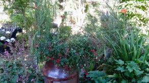 chimney pot plants