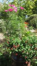 Chimley plants