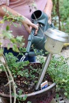 Jackie watering pot beside Gazebo Path