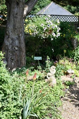 knifophia and petunias