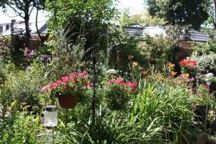 Margery's Bed and hanging baskets: petunias, day lilies