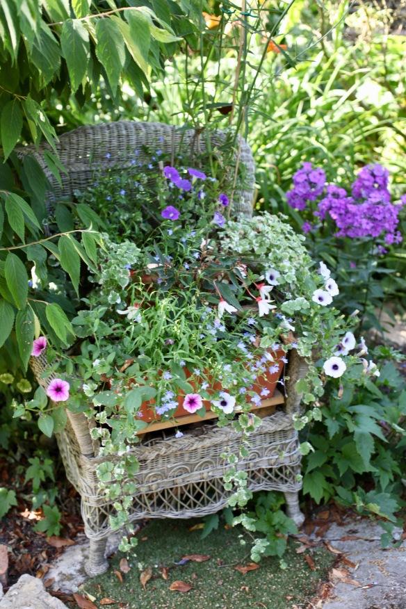 Petunias, begonias etc in cane chair