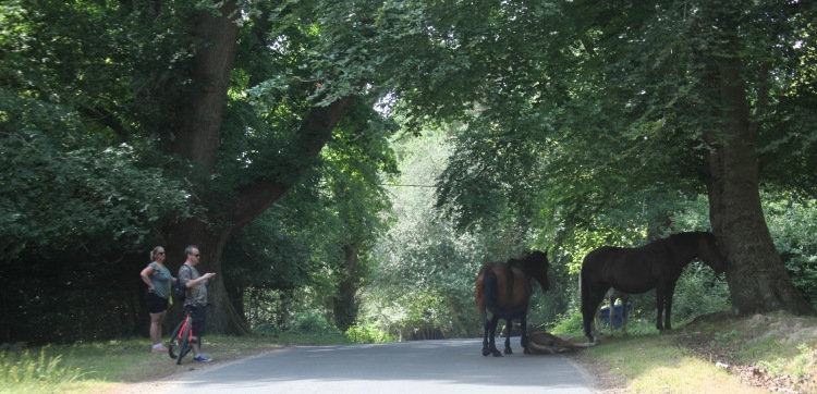 Cyclists photographing ponies and foal