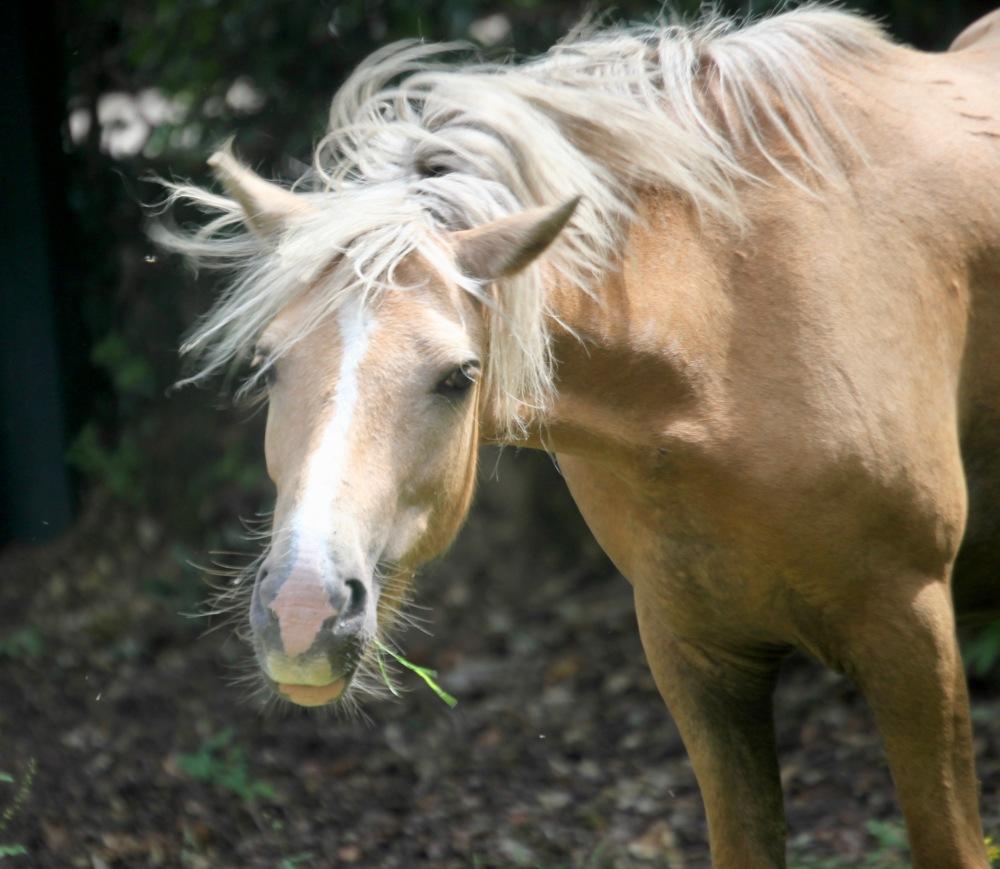 Pony with grass
