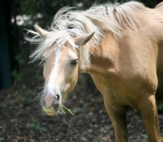Pony with grass