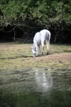 Pony on drying lake