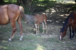 Ponies and foal