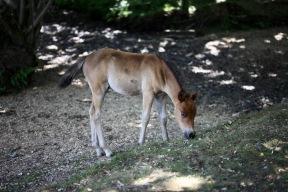 Foal, dappled sunlight