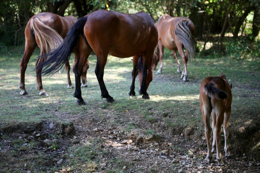 Ponies, tails twitching