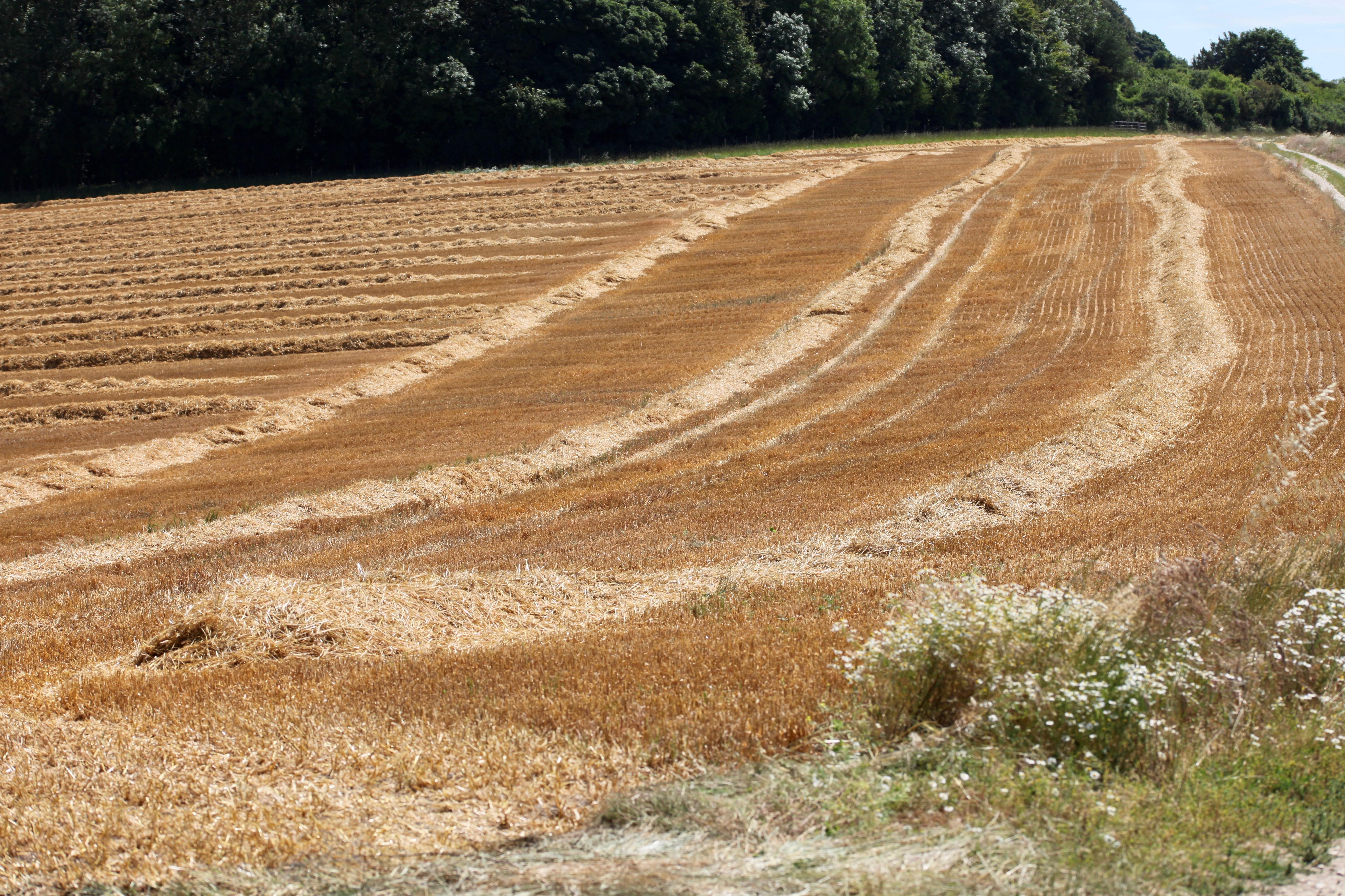 Field, Longford Farms Ltd