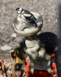 Chaffinch feature in Garden of Delights