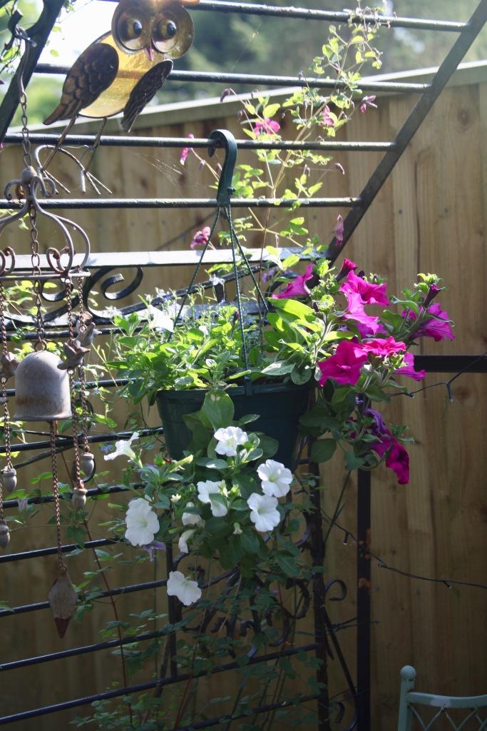 Petunias in Westbrook Arbour