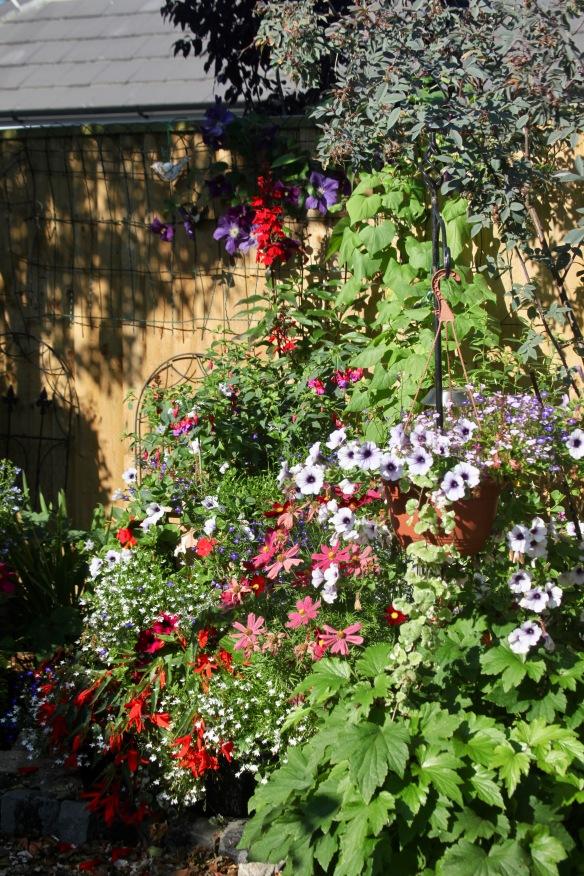 Petunias, cosmoses, clematis, fuchsia, begonias, lobelias