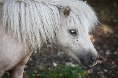 Pony small