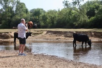 Man photographing cattle in Highland Water