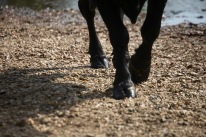 Hooves on dry river bed