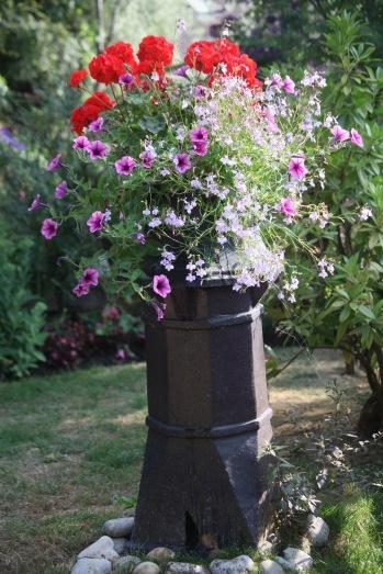 Geraniums. petunias, and lobelias in chimney pot