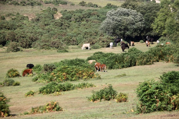 Cattle in landscape